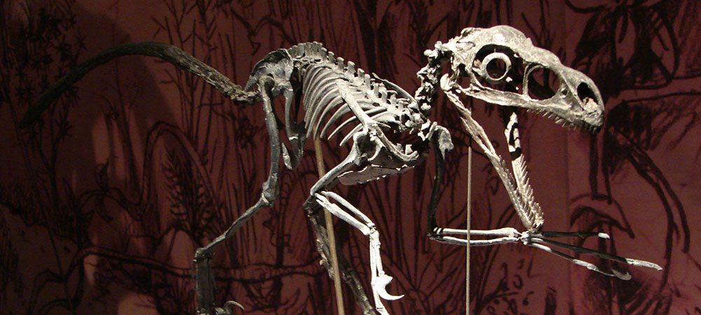 Sommes-nous plus malins que les dinosaures ? Ne pas devenir une espèce fossile