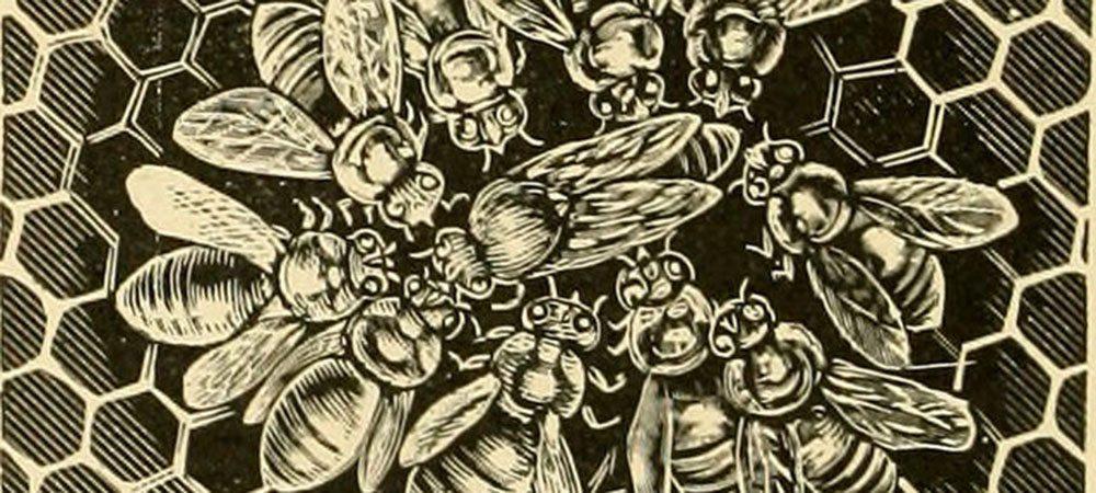 Les abeilles à Bruxelles