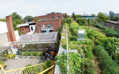 Agriculture urbaine : utopie par-delà ville et campagne ?