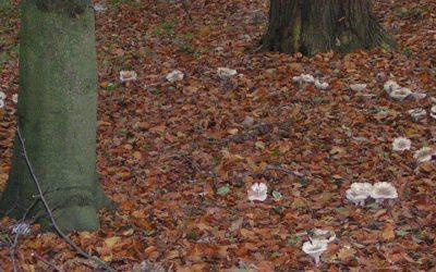 Forêts wallonnes : Mise en lumière des enjeux de la privatisation