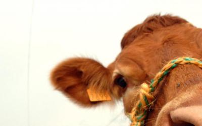 La leçon d'écologie de l'élevage