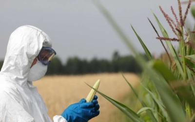 Les OGM et la recherche : un principe de précaution à défendre
