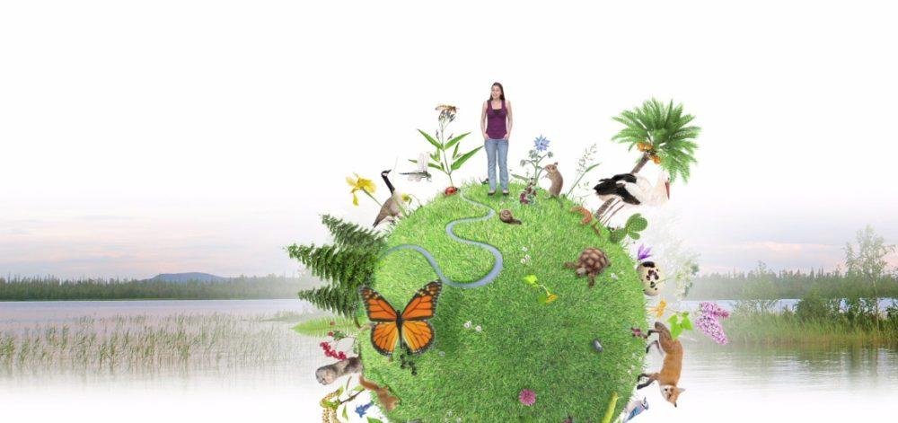 Biodiversité en Wallonie : un état des lieux