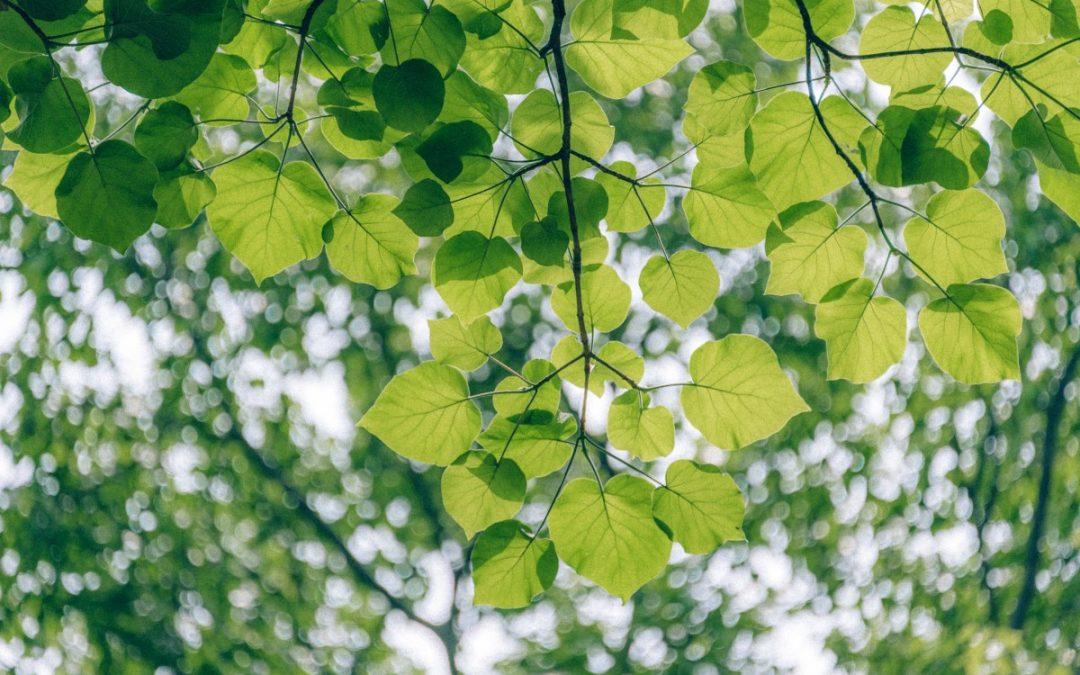 Un espace pour l'écologie dans l'histoire des idées politiques