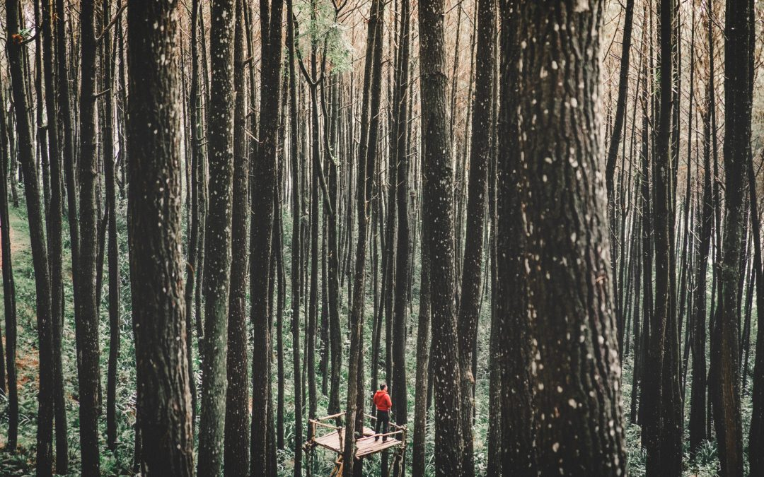Donner une dignité morale à la nature pour mieux habiter la Terre